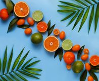 Citrus fruits on a blue background. Top view royalty free stock photos