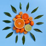 Citrus fruits on a blue background stock image