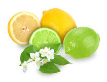 Citrus fruits with branch of jasmine Royalty Free Stock Photo