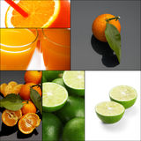 Citrus fruits collage Stock Photography