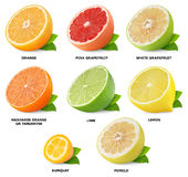 Citrus fruits collection Stock Photos