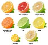 Citrus fruits collection stock photos