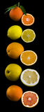 Citrus Fruits Collection. Sliced Lemon, Orange, Mandarin, grapefruit on black background Stock Images