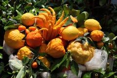 Citrus fruits Stock Photography