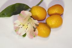 Citrus fruits with the colorful flowers close up in the sunshine Stock Photography