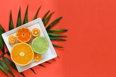 Citrus fruits on a coral red background. Close up royalty free stock image