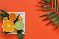 Citrus fruits on a coral red background. Citrus fruits on a plate on a coral red background close up stock image