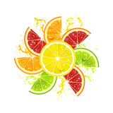 Citrus Fruits in the Form of a Flower Stock Photos