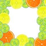 Citrus fruits frame Stock Photos