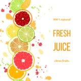 Citrus fruits fresh juice. Bergamot, lemon, grapefruit, lime, mandarin, pomelo, orange, blood orange with splashes Royalty Free Stock Images
