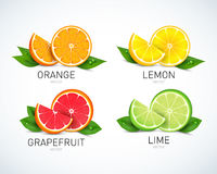 Citrus fruits halves and quarter wedges, 4 realistic icons square with orange grapefruit lemon, isolated vector illustration Stock Photos