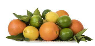 Citrus Fruits Isolated Against White. Stock Photos