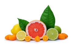 Citrus fruits isolated. Stock Photos