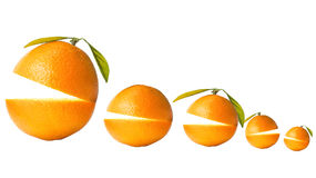 Citrus fruits. Isolated on white Stock Image