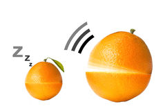 Citrus fruits. Isolated on white Stock Photography