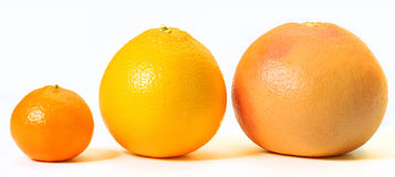 Citrus fruits Stock Photography