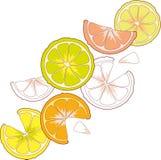 Citrus fruits lemon lime orange grapefruit Royalty Free Stock Photo