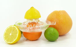 Citrus fruits Royalty Free Stock Photo