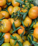 Citrus fruits at the market. In Ben Tre, Vietnam Royalty Free Stock Photo