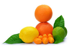 Citrus fruits  Orange, Grapefruit, Lemon, Lime, Kumquat  isolated. On white background Royalty Free Stock Image
