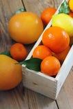 Citrus fruits - orange, lemon, tangerine, grapefruit Royalty Free Stock Photos