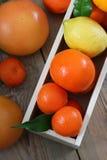Citrus fruits - orange, lemon, tangerine, grapefruit Stock Images