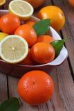 Citrus fruits - orange, lemon, tangerine, grapefruit Stock Image