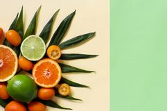 Citrus fruits on a pastel background. Top view royalty free stock images