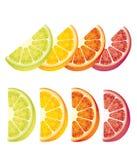 Citrus fruits. Photo realistic illustration of colorful slices of orange, grapefruit, lime, lemon on white background royalty free illustration