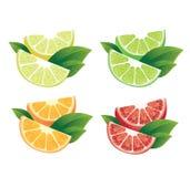 Citrus fruits. Photo realistic illustration of colorful slices of orange, grapefruit, lime, lemon on white background vector illustration