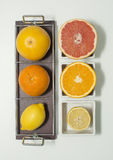 Citrus fruits. On plates, isolated Royalty Free Stock Image