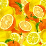 Citrus fruits seamless background vector illustration