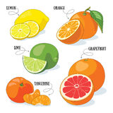Citrus fruits. Set of 5 vector citrus fruits illustrations stock illustration