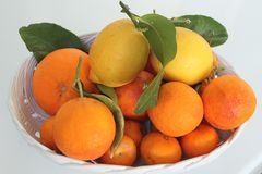 Citrus fruits of Sicily - Italy Stock Photography