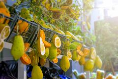 Citrus fruits of sicily Royalty Free Stock Photography