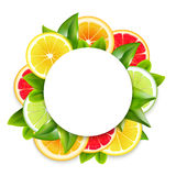 Citrus Fruits Slices Arrangement Round Frame. Freshly cut citrus fruits slices and leaves circle ornamental round frame arrangement colorful natural realistic Royalty Free Stock Photo
