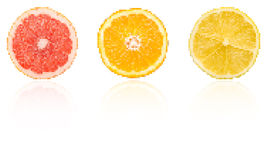 Citrus Fruits Slices Pixel Vector. With Reflection Royalty Free Illustration