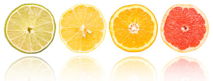 Citrus Fruits Slices Set Royalty Free Stock Images