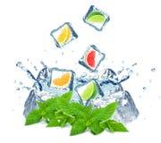 Citrus fruits splash Stock Image