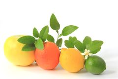 Citrus fruits. Various citrus fruits: grapefruit, orange, lemon and lime with flowering citrus branch Stock Images
