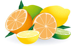 Citrus Fruits Vector Stock Photo