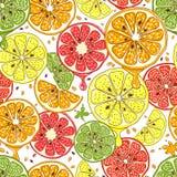 Citrus fruits vector seamless background Stock Photos