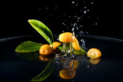 Citrus fruits in water Stock Photos