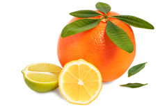 Citrus fruits on a white background Royalty Free Stock Photos