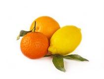 Citrus fruits on white: mandarin, lemon and orange Royalty Free Stock Photos