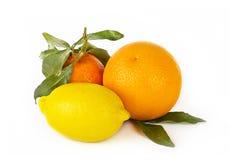Citrus fruits on white: mandarin, lemon and orange Stock Image