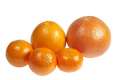 Citrus fruits on a white background Royalty Free Stock Image