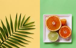 Citrus fruits on a yellow and green background. Top view royalty free stock images