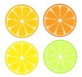 citrus fyra vektor illustrationer