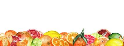 Citrus gränsvattenfärg royaltyfri illustrationer